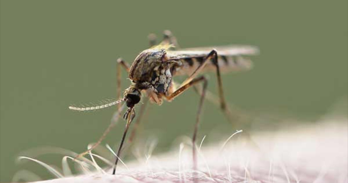Nie taki komar straszny