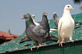zabezpieczenia-budynkow-przed-ptakami